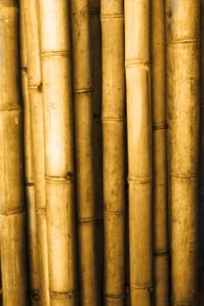 "Bambusstange M ""Apus"", 200 cm"