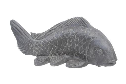 Koi Fisch, 55 cm L